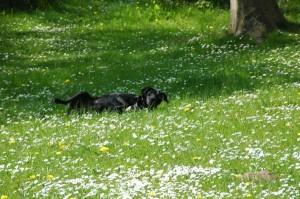 Auch sie freut der Frühling im Garten