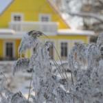 Ferienhaus am Dieksee in Ostholstein